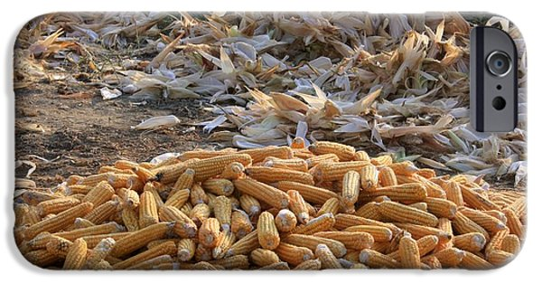 Sweet Corn Farm iPhone Cases - Sweet Corn and Husks iPhone Case by Tracey Harrington-Simpson