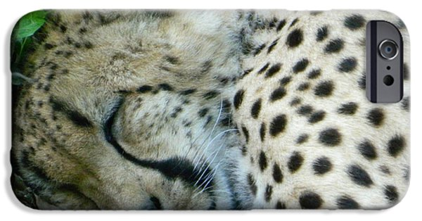 Smithsonian iPhone Cases - Sweet Dreams Cheetah iPhone Case by Emmy Marie Vickers