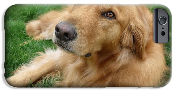 Dogs iPhone Cases - Sweet Golden Retriever iPhone Case by Larry Marshall