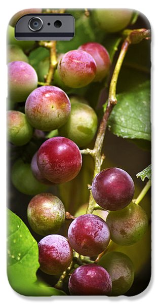 Sweet Grapes iPhone Case by Christina Rollo