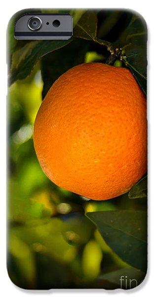 Haybale iPhone Cases - Sweet Orange iPhone Case by Robert Bales