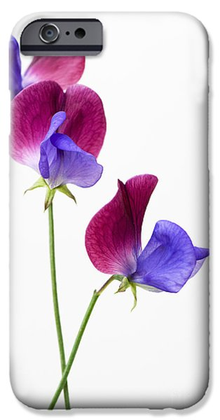 Annual iPhone Cases - Sweet Pea Cupani Flowers On White iPhone Case by Tim Gainey