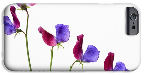 Annual iPhone Cases - Sweet Pea Cupani Flowers iPhone Case by Tim Gainey