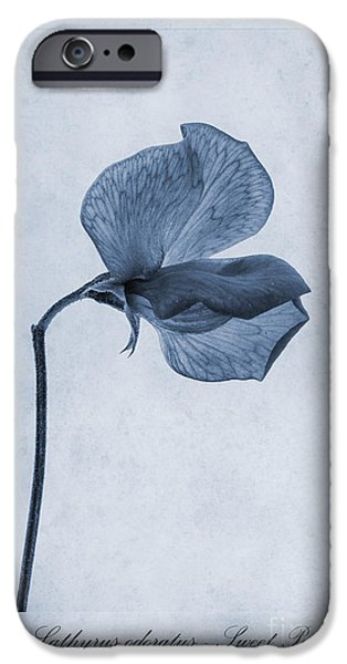 Sweet Digital iPhone Cases - Sweet Pea Cyanotype iPhone Case by John Edwards