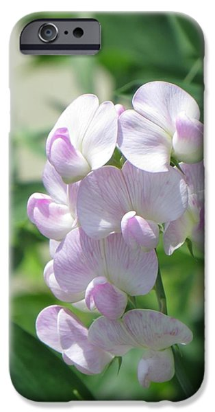 Purple Sensation iPhone Cases - Sweet pea Florals  iPhone Case by Sonali Gangane