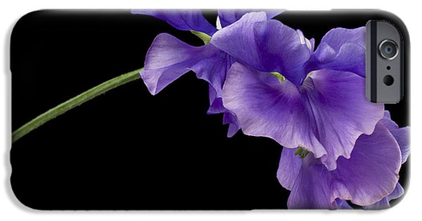 Annual iPhone Cases - Sweet Pea Study iPhone Case by Anne Gilbert