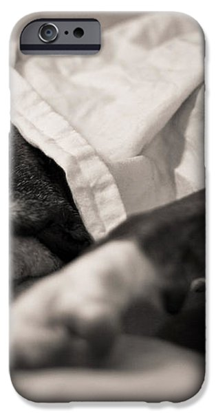 Sweet Sleeping Boxer iPhone Case by Stephanie McDowell