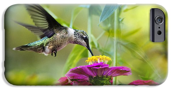 Hummingbird iPhone Cases - Sweet Success iPhone Case by Christina Rollo