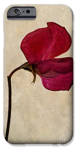 Sweet Textures iPhone Case by John Edwards