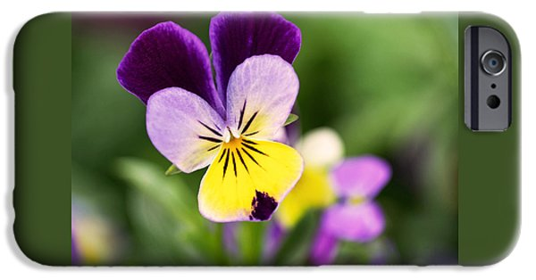 Violet Photographs iPhone Cases - Sweet Violet iPhone Case by Rona Black