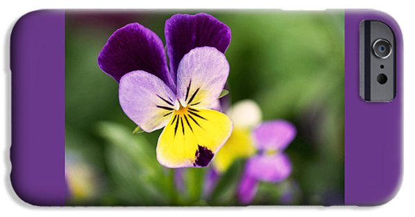 Pansy iPhone Cases - Sweet Violet iPhone Case by Rona Black