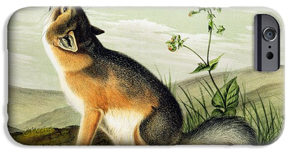 Audubon iPhone Cases - Swift Fox iPhone Case by John James Audubon