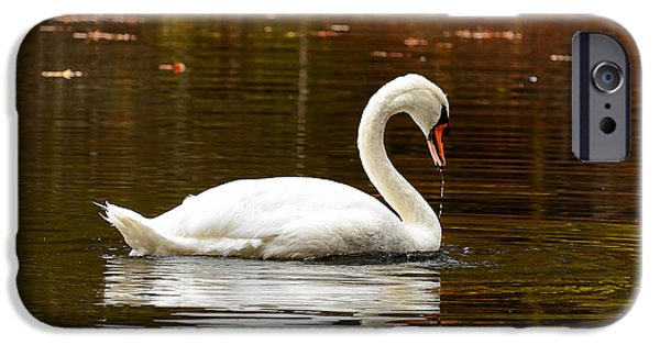 Swan iPhone Cases - Swim and Grace iPhone Case by Lourry Legarde
