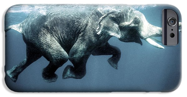 Elephants iPhone Cases - Swimming elephant iPhone Case by Olivier Blaise
