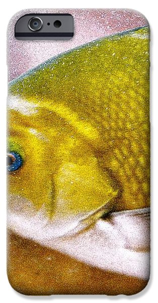 Swimming Fish  iPhone Case by Artist and Photographer Laura Wrede
