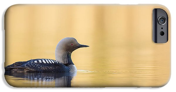 Loon iPhone Cases - Swimming on a Lake of Gold iPhone Case by Tim Grams
