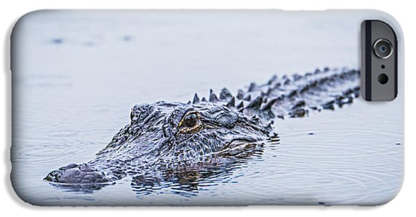 Carnivore iPhone Cases - Swimming on a Rainy Day iPhone Case by Duane Miller