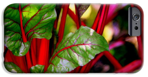 Swiss Chard iPhone Cases - Swiss Chard Forest iPhone Case by Karen Wiles