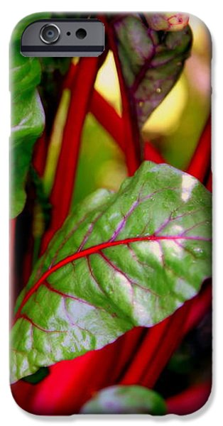 SWISS CHARD FOREST iPhone Case by KAREN WILES