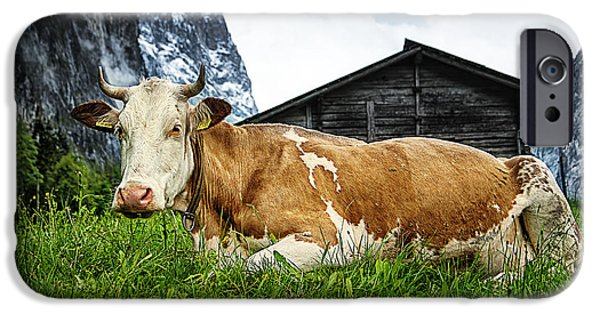 Brown Swiss iPhone Cases - Swiss Miss iPhone Case by Ryan Wyckoff
