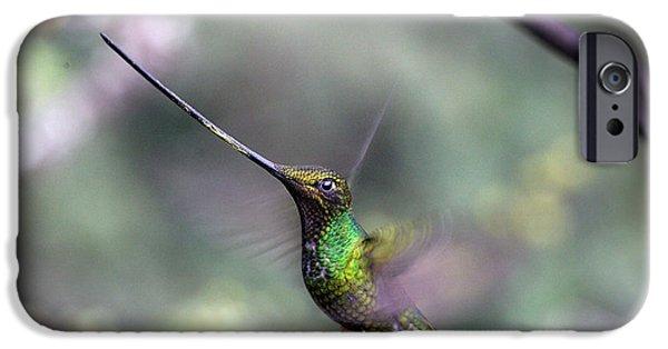Flight iPhone Cases - Sword-billed Hummingbird hovering Ecuador iPhone Case by Tony Mills