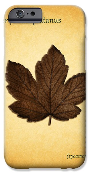 Sycamore iPhone Cases - Sycamore iPhone Case by Mark Rogan