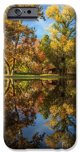 Tree. Sycamore iPhone Cases - Sycamore Pool Reflections iPhone Case by James Eddy