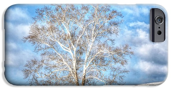 Tree. Sycamore iPhone Cases - Sycamore Winter iPhone Case by Jaki Miller