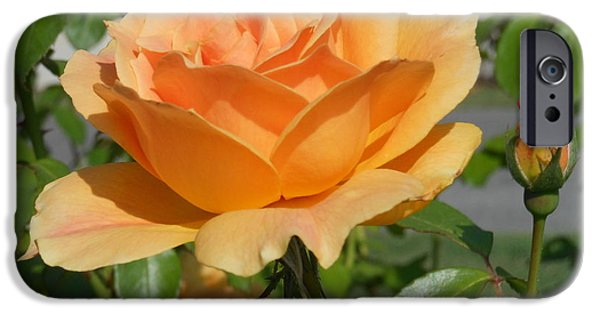 Windy Point Winery iPhone Cases - Symbol of Love iPhone Case by Kay Gilley