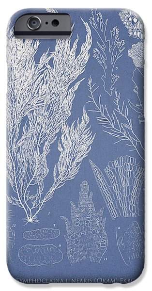 Algae iPhone Cases - Symphocladia linearis iPhone Case by Aged Pixel