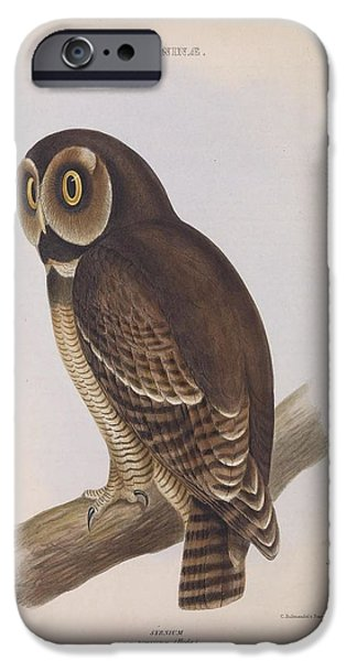 Business Paintings iPhone Cases - Syrnium Owl iPhone Case by Unknown Artist