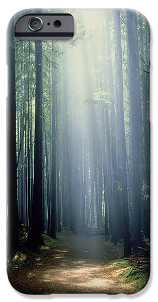 China Beach iPhone Cases - T. Bonderud Path Through Trees In Mist iPhone Case by First Light