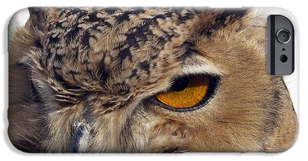 Photos Of Birds iPhone Cases - The Eagle Eye iPhone Case by Skip Willits