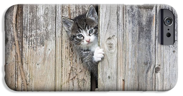Shed iPhone Cases - Tabby Kitten Peering From Shed iPhone Case by Duncan Usher