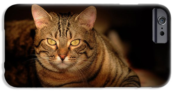 The Tiger iPhone Cases - Tabby Tiger Cat iPhone Case by Renee Forth-Fukumoto