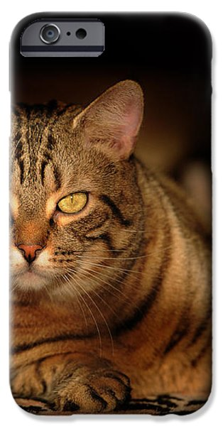 Tabby Tiger Cat iPhone Case by Renee Forth-Fukumoto