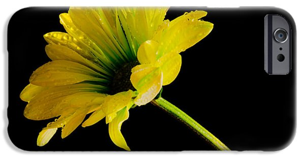 Bloosom iPhone Cases - Table Top Macro iPhone Case by Nick  Boren