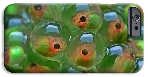 Spring Peepers Paintings iPhone Cases - Tadpole iPhone Case by Lanjee Chee