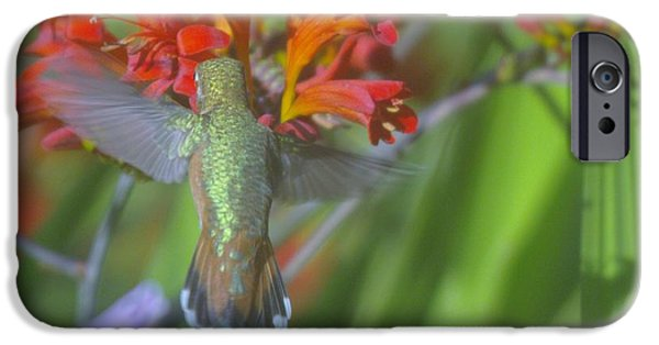 Action Shot iPhone Cases - Tail Feathers Of A Humming Bird  iPhone Case by Jeff  Swan