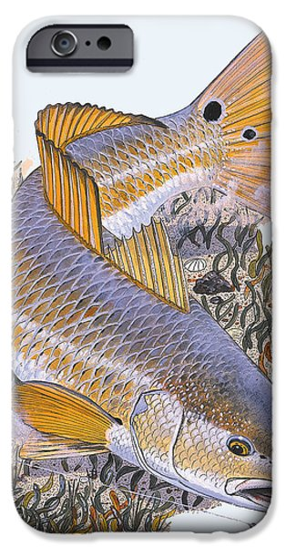 Tailing Redfish iPhone Case by Carey Chen