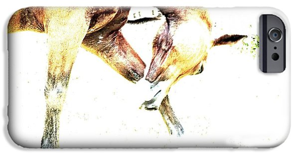 American Saddlebred Art iPhone Cases - Take A Bow iPhone Case by Annie Zeno
