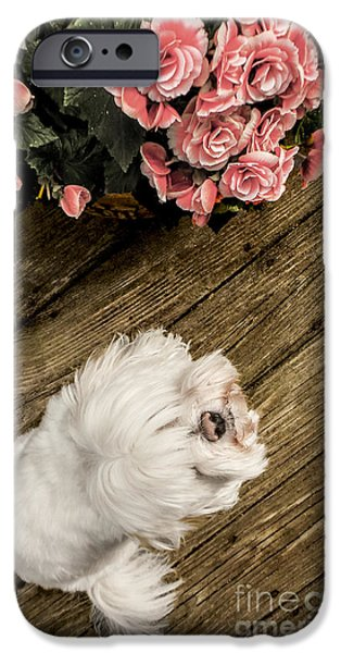 Puppies Digital iPhone Cases - Havanese Puppy iPhone Case by Charlie Cliques