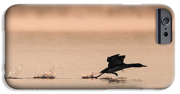 Fog Mist iPhone Cases - Take-off Loon iPhone Case by Keith R Crowley