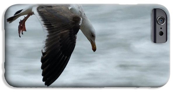 Seagull iPhone Cases - Taking a Dive iPhone Case by Ernie Echols