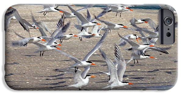Flying Seagull iPhone Cases - Taking Flight iPhone Case by Jon Neidert