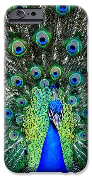TALK of the WALK iPhone Case by KAREN WILES