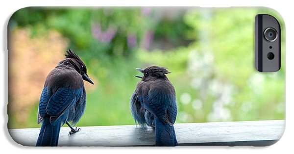 Stellar iPhone Cases - Talking Jays iPhone Case by Sharon  Talson