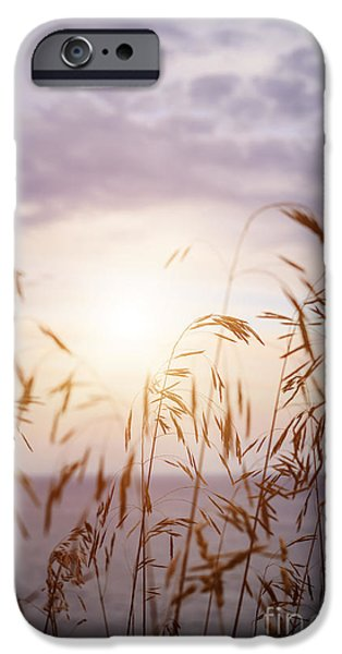Sunflare iPhone Cases - Tall grass at sunset iPhone Case by Elena Elisseeva