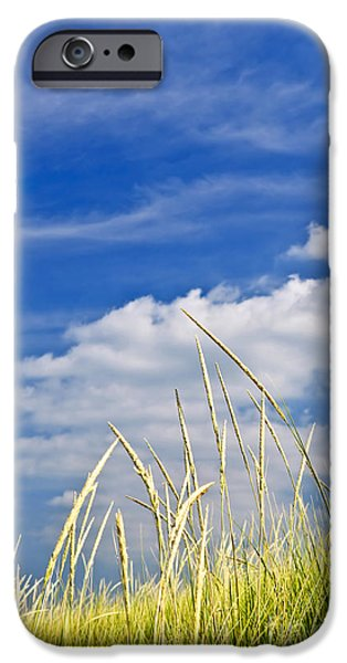 Beach iPhone Cases - Tall grass on sand dunes iPhone Case by Elena Elisseeva