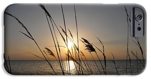 Ocean Sunset iPhone Cases - Tall Grass Sunset iPhone Case by Bill Cannon